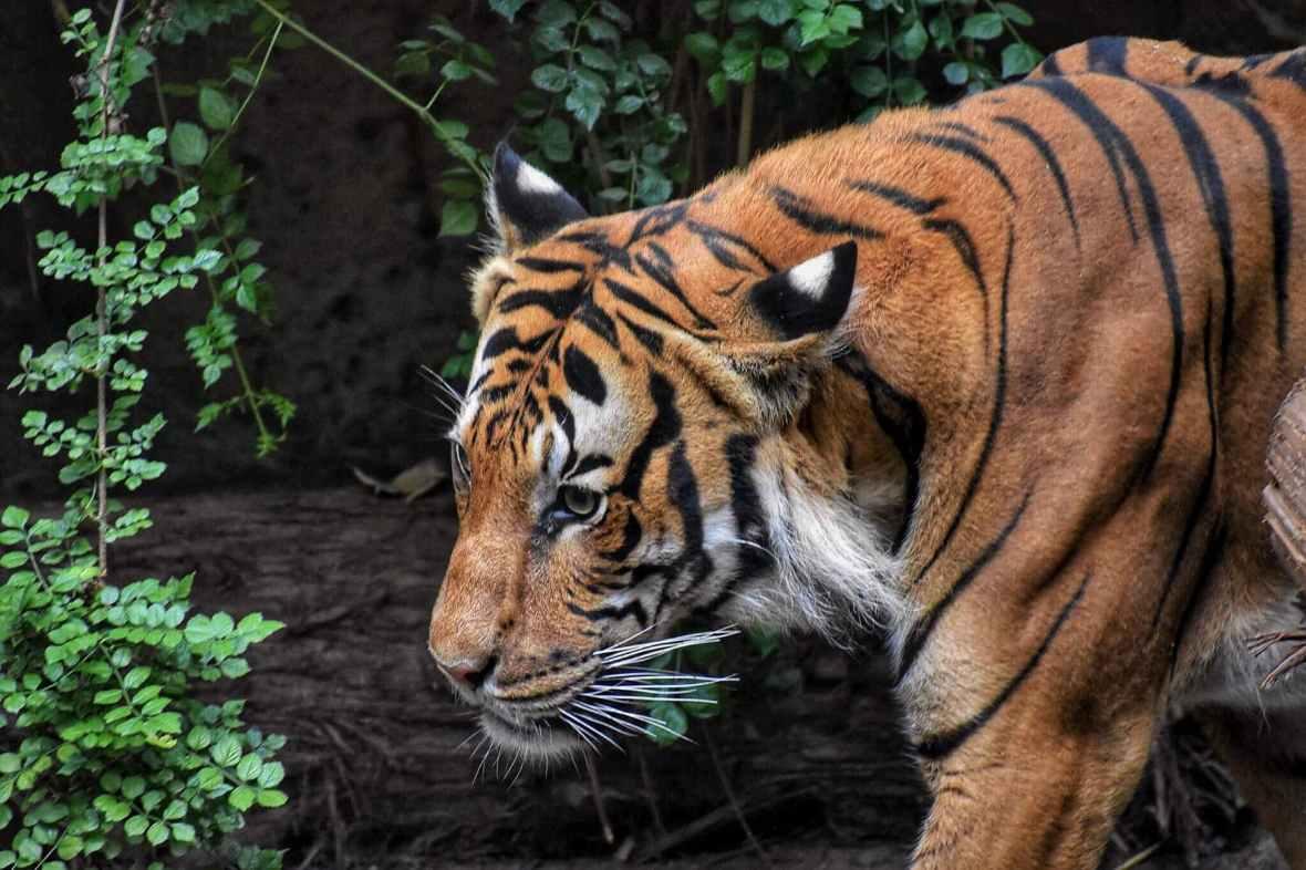 angry animal animal photography big